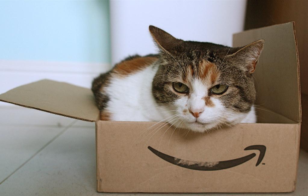 Amazonキャット